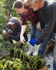 seniors-jardinage