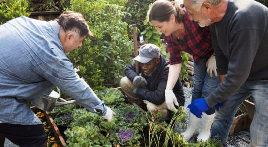 seniors-jardinages